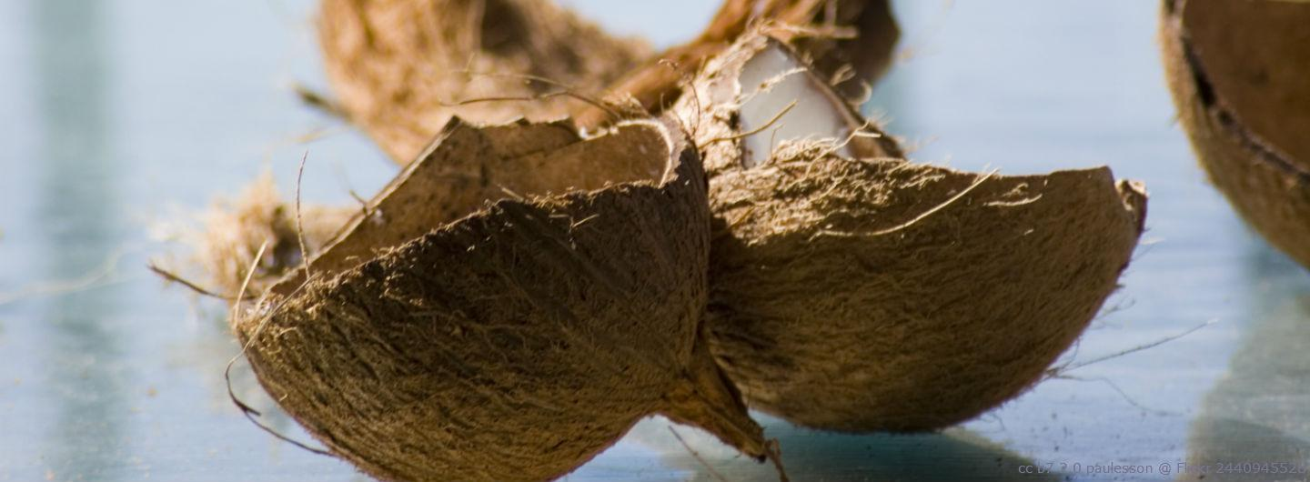 Learn More About the Coconut Craze in Cosmetics