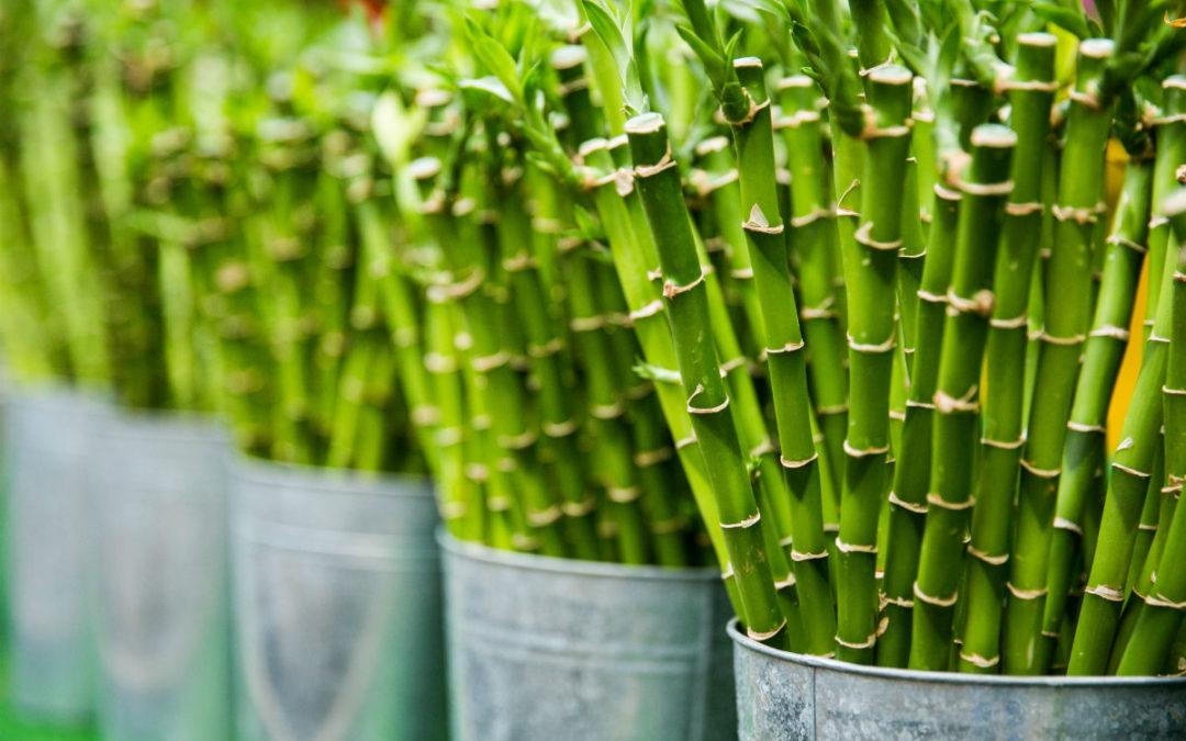 Bamboo: Source of Sustainable Cosmetic Packaging