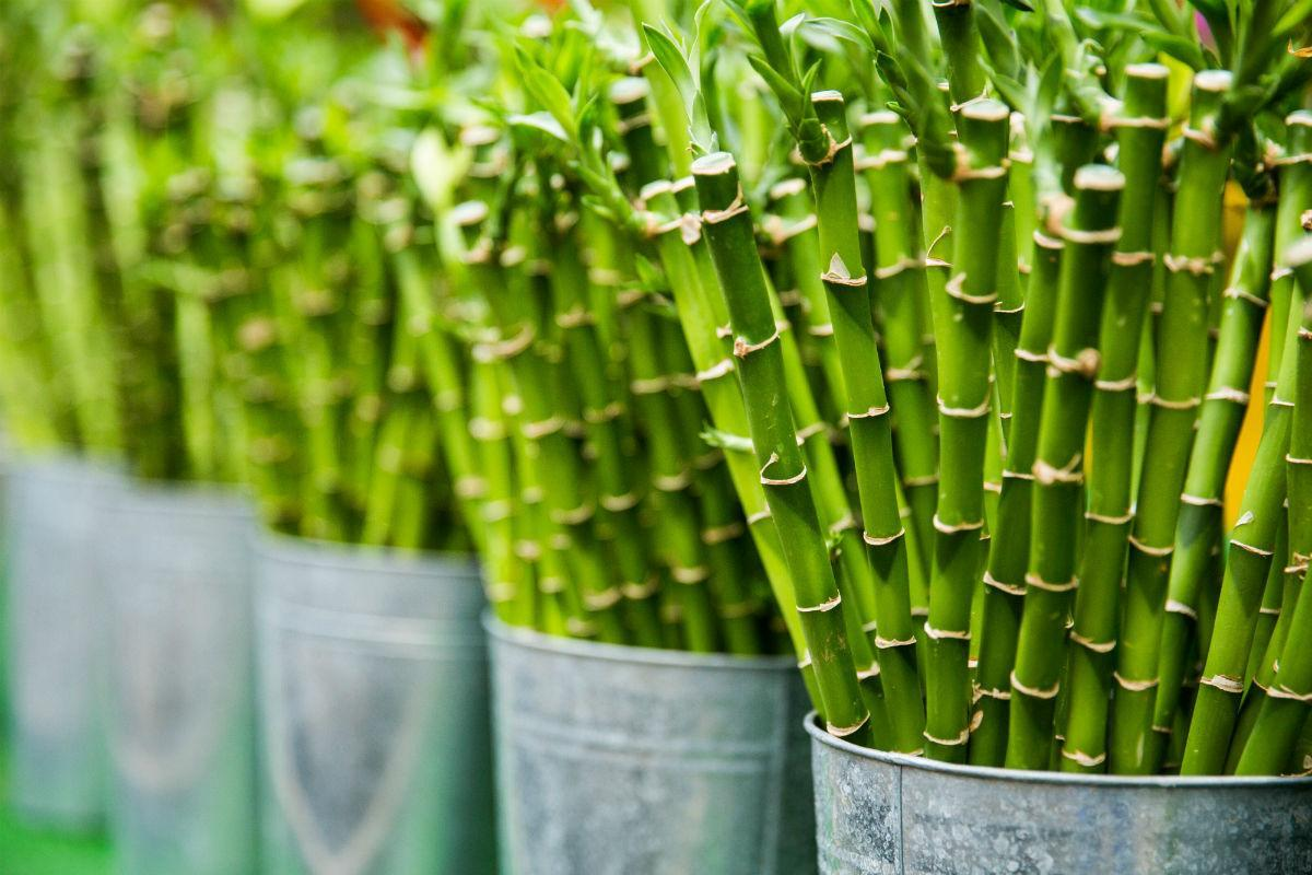 bamboo is the sustainable eco alternative for cosmetics packaging